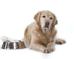 Agri Fallen - Aubagne - Aliments et accessoires pour chiens