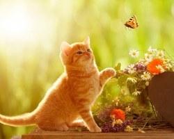 Agri Fallen - Aubagne - Aliments et accessoires pour chats