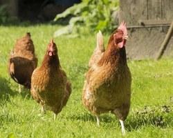 Agri Fallen - Aubagne - Accessoires et clapiers à poules