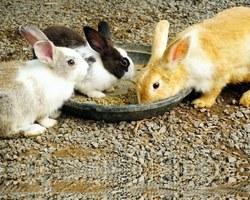 Agri Fallen - Aubagne - Aliments et accessoires pour lapins