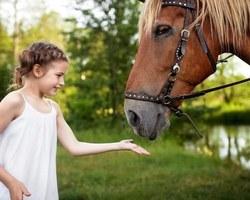 Agri Fallen - Aubagne - Aliments, accessoires et couvertures pour chevaux