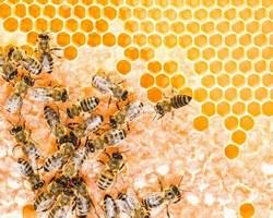 Agri Fallen - Aubagne - Matériel d'apiculture