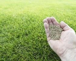 Agri Fallen - Aubagne - Semences de gazon et pelouse