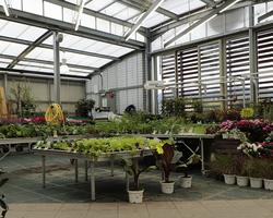 Agri Fallen - Aubagne - Plantes et arbustes